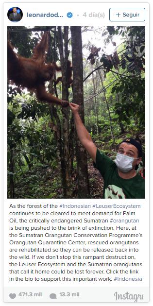 LeonardoDiCaprio_Orangutan